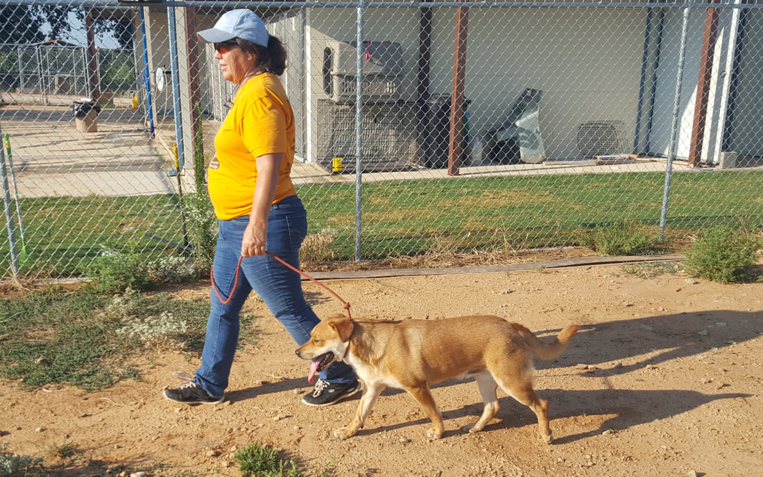 Our Animals - Nocona Lucky Paws Animal Shelter